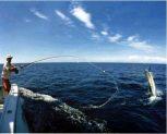 tengeri botok