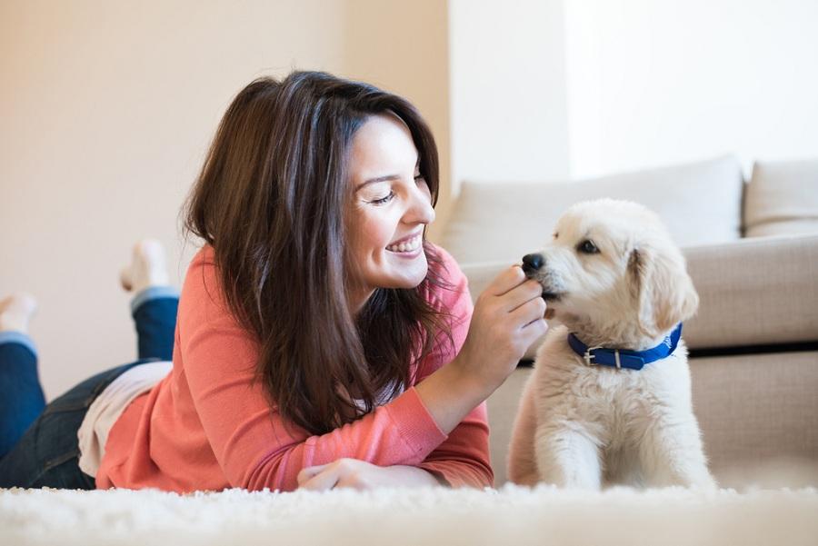 Ha kutya érkezik a családba, egy kisállat webshop hasznos társ!