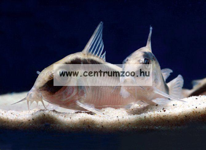 JBL Sansibar Snow akváriumi kavics aljzat  5kg (JBL67060) hófehér