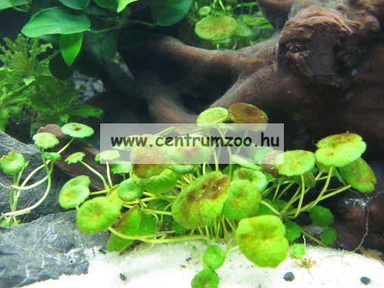 Sera Ectopur só 130g (goma, ectoparazita ellen) (002320)