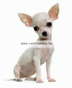 """Camon Parure """"Cuccioli"""" kutyahám + póráz több színben (D630/B)"""