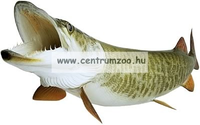 Nevis Snatch 3m 15-45gr (1820-300) pergető bot