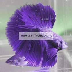 Penn Plax Jégvarázs akvárium 2,65l akvárium betta halaknak (079900)