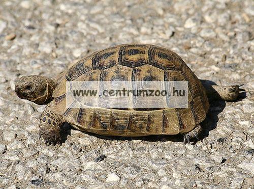 JBL Tortoise Sun Terra 10ml vitamin teknősöknek (JBL70442)