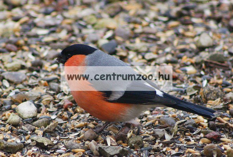 Ferplast madárodú kertbe Natura FUN2