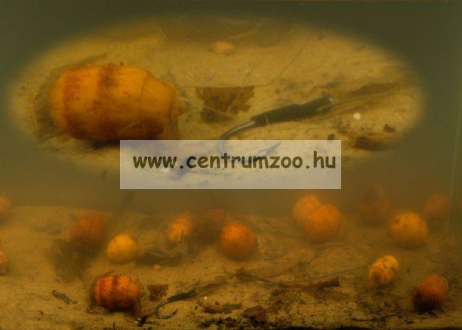 Tigrismogyoró TIGERNUTS (Chufa) 12,5kg 2016NEW - vákum csomagolt
