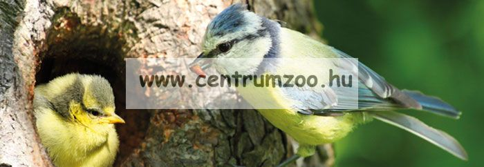 Ferplast Natura Outside Nest madárodú kertbe N6 WHITE