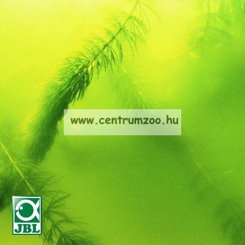 JBL AlgoPond Green  250ml tavi hatásos algagátló zöld vízre (JBL26064)