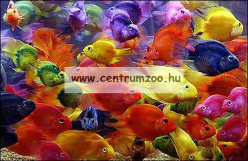 Ferplast Rubber Scraper akváriumi tisztító (BLU9013)