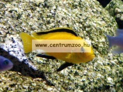 JBL Novo Malawi 5,5l sügértáp (JBL30012)