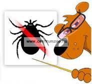 Insecticide 2000 rovarölő utántöltő  5 liter (kullancs, bolha, tetü, atka, hangya, légy, moly)