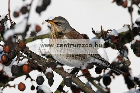 Ferplast Natura Outside Nest madárodú kertbe N9 WHITE