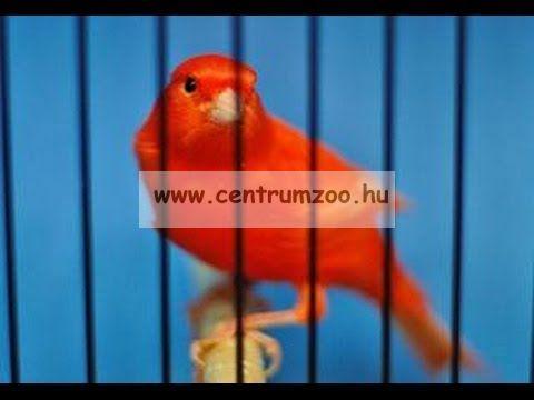 KIKI ROODMOUSE - RED 300g szinélénkítő tojástáp (13132)
