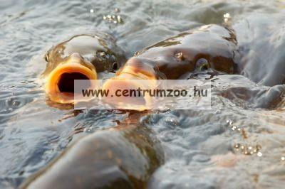Shimano Olive Protection Carp Mat prémium pontymatrac bölcső 104x60cm (SHOL13)