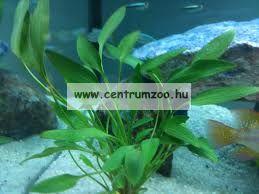 JBL Ferropol általános növénytáp - 100 ml (23041)