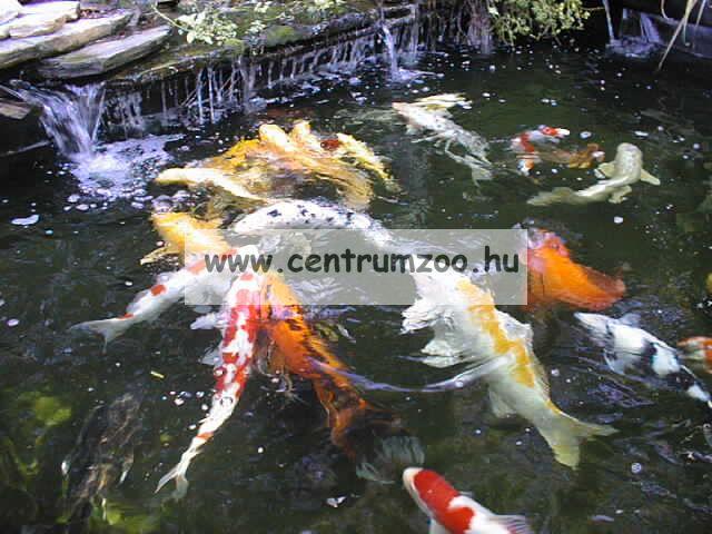 Tetra Pond AquaSafe vízkezelő 500ml, 10m3 tóhoz
