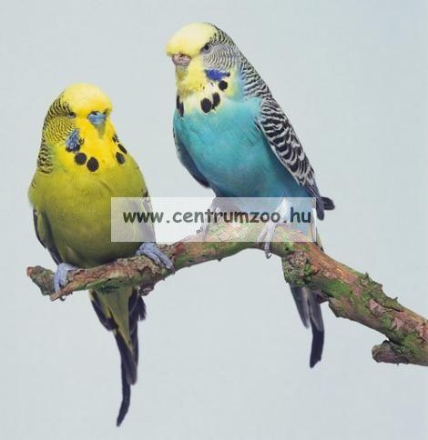 Kiss Product Hullámos papagáj tenyésztői keverék 1kg