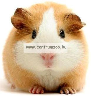Lolo Pets-Vitapol Rodent préselt forgács alom 12 liter