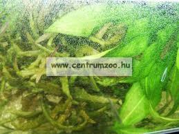 """Sera Phosvec-Clear 100ml """"az alga mentes, tiszta vízért"""" ()"""