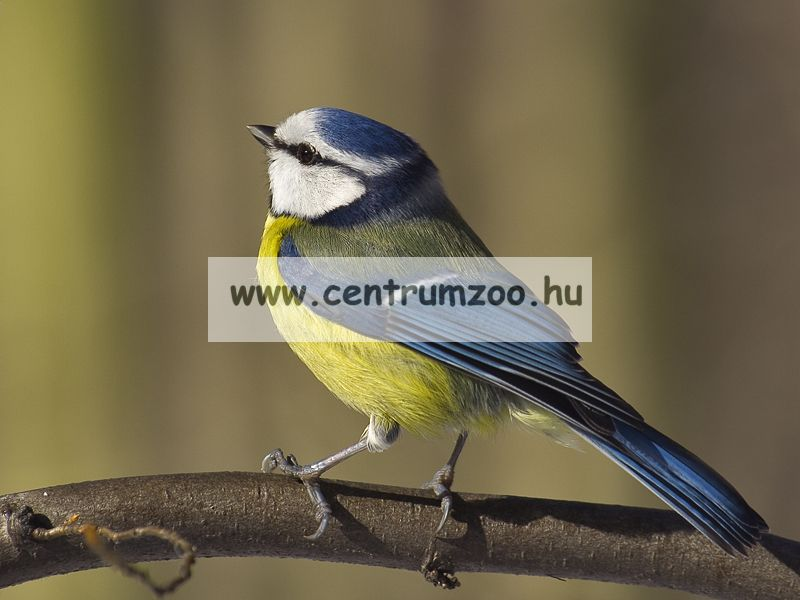 Ferplast madárodú kertbe Natura FUN5
