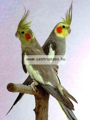 Kiss Product Nímfa papagáj tenyésztői keverék 10kg - GAZDASÁGOS KISZERELÉS
