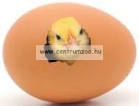 TOJÁS ÁTVILÁGÍTÓ - Golden Egg LED Light - Lámpázó termékenység ellenőrző LÁMPA