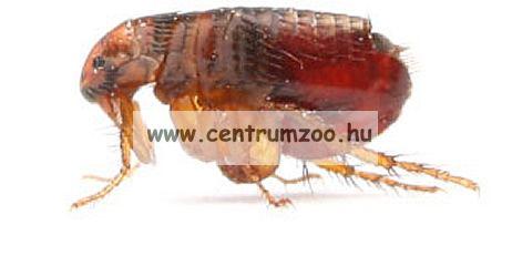 Insecticide 2000 rovarölő permet 1000ml pumpás (kullancs, bolha, tetü, atka, hangya, légy, moly)