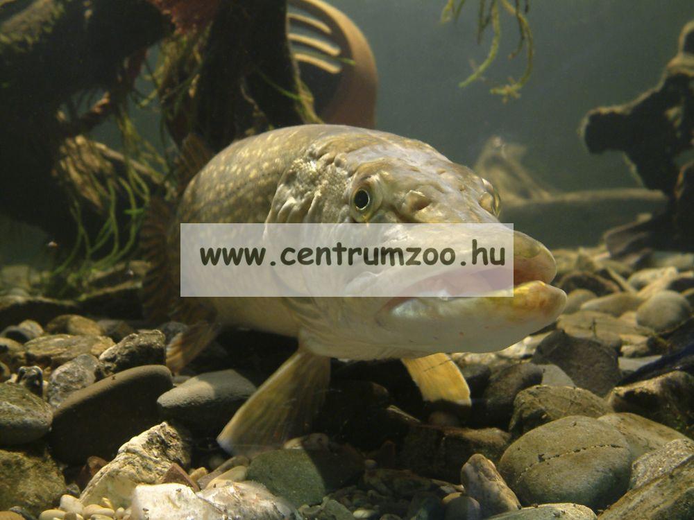 Daiwa Exceler Dipsy Diver 2,70m 15-30lb pergetőbot (11808-271)