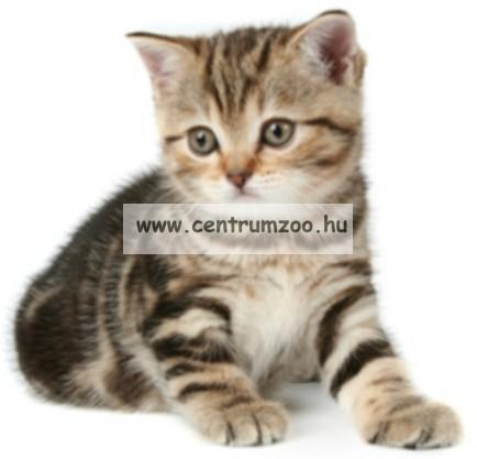 Camon Cat Collare Gatto Nylon Reflex fényvisszaverő nyakörv cicáknak (DG016)