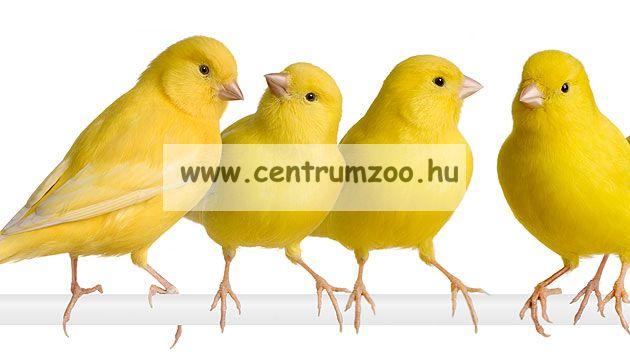 Kiss Product Kanári tenyésztői keverék 10kg - GAZDASÁGOS KISZERELÉS