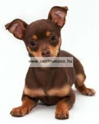 "Camon Cuccia ovale ""British"" Professional modern kutyafekhely 40cm (CC055/A)"