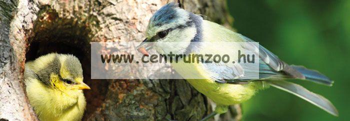 Ferplast Natura Outside Nest madárodú kertbe N8 WHITE