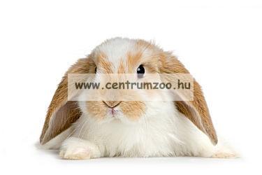 Camon nyúl, törpenyúl  kényelmes hám és póráz  (H410/A)