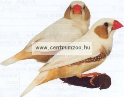 Ferplast Pagoda Bianco díszes fehér színű prémium felszerelt madár kalitka