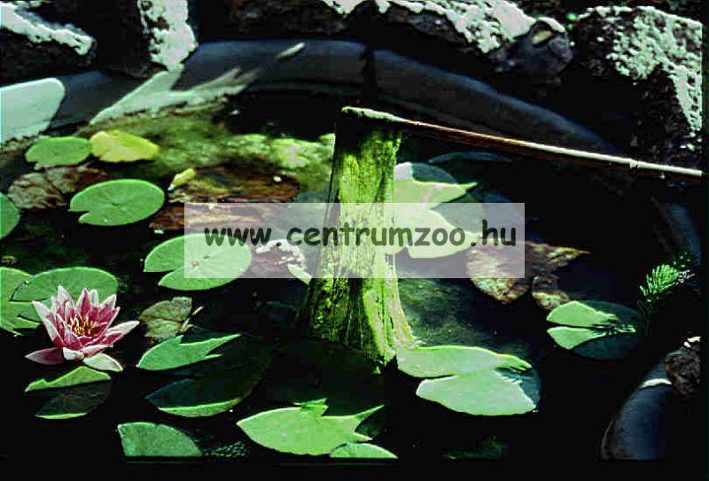 Tetra Pond Crystal Water víztisztító 500ml, 10m3 tóhoz (180611)