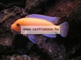 Tetra Cichlid® Colour 10 liter sügértáp