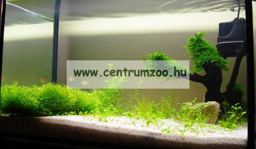 Aquael Fan Mikro Plus akváriumi belsőszűrő 3-50l