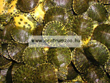Tetra Reptomin 2016New teknőstáp 1 liter