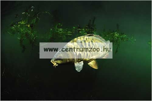 GOLD STAR BIG GREEN FISH mérleg 22kg (80212-110)