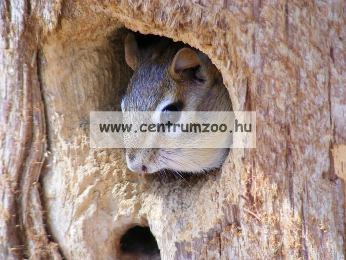 Ferplast Scoiattoli mókus, görény ketrec