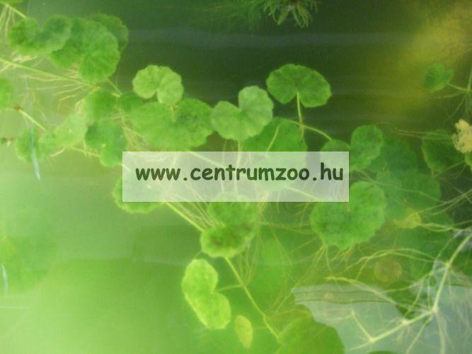 Tetra Pond AlgoSchutz 250ml algaképződést gátló 5m3 tóvízhez (751187)