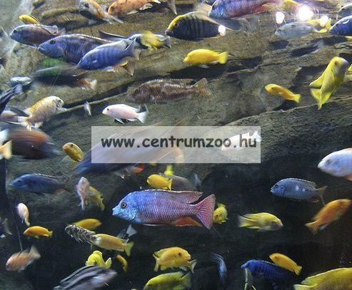 Tetra Cichlid® Pro 500ml sügértáp