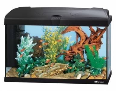 Alacsony árfekvésű akvárium szettek