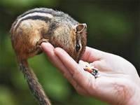 kisrágcsáló ketrecek (mókus, csincsilla)