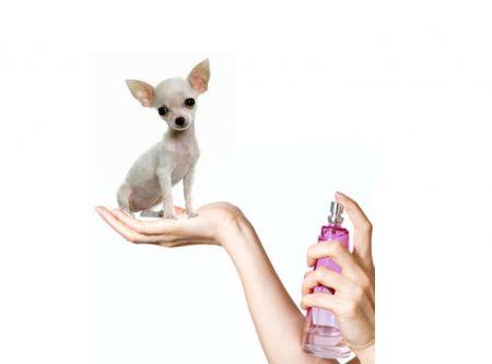 parfümök, illatosítók