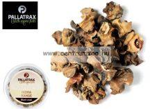Pallatrax Hidra Black Snail aromás fekete csiga (1002)