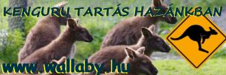 Bennett kenguru tartás Magyarországon